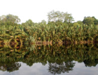 Jambi - Indonesia, 2011.  ©Center For International Forestry Research/Iddy Farmer