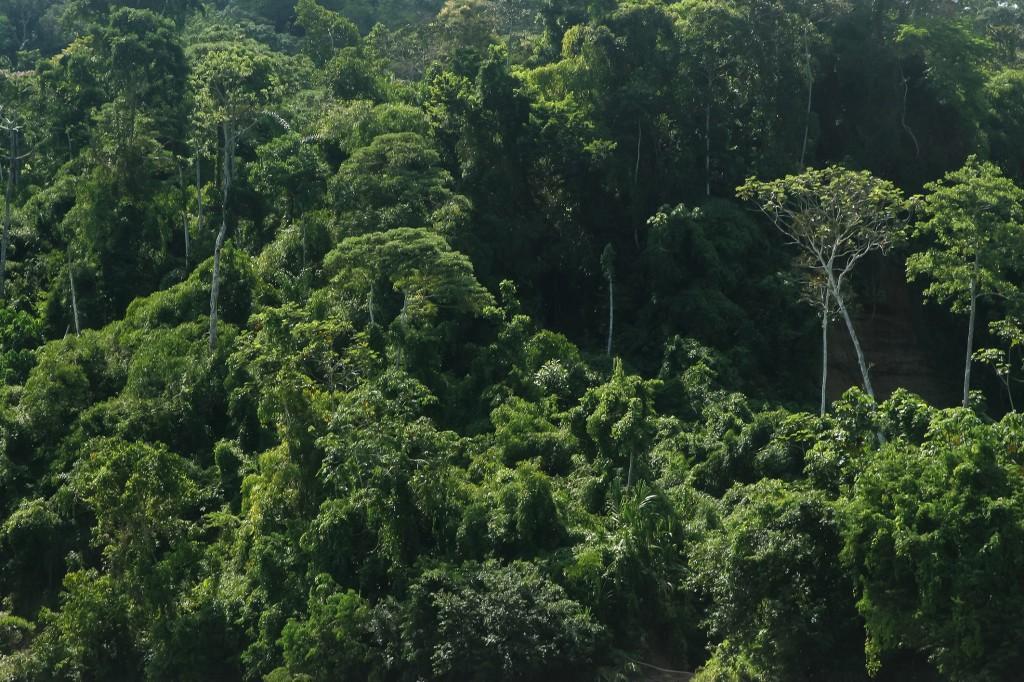 a vast canopy from bajo urubamba peru
