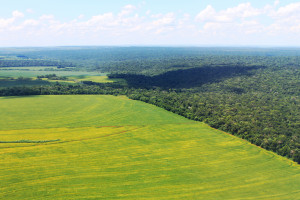crops and national park brazil