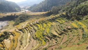 rice farming in a mountain landscape nepal