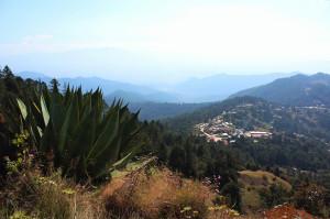 ecotone waltz oaxaca mexico