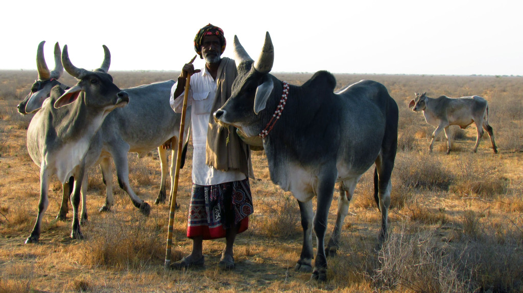 sustainable livestock husbandry in gujarat india