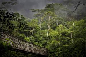 espanol puente selva ecuador