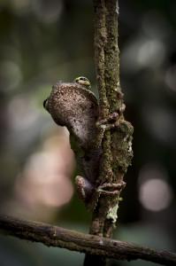 espanol madera amazonia peruana