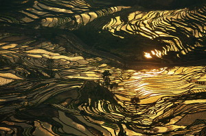 terraced rice fields of yuanyang china 2