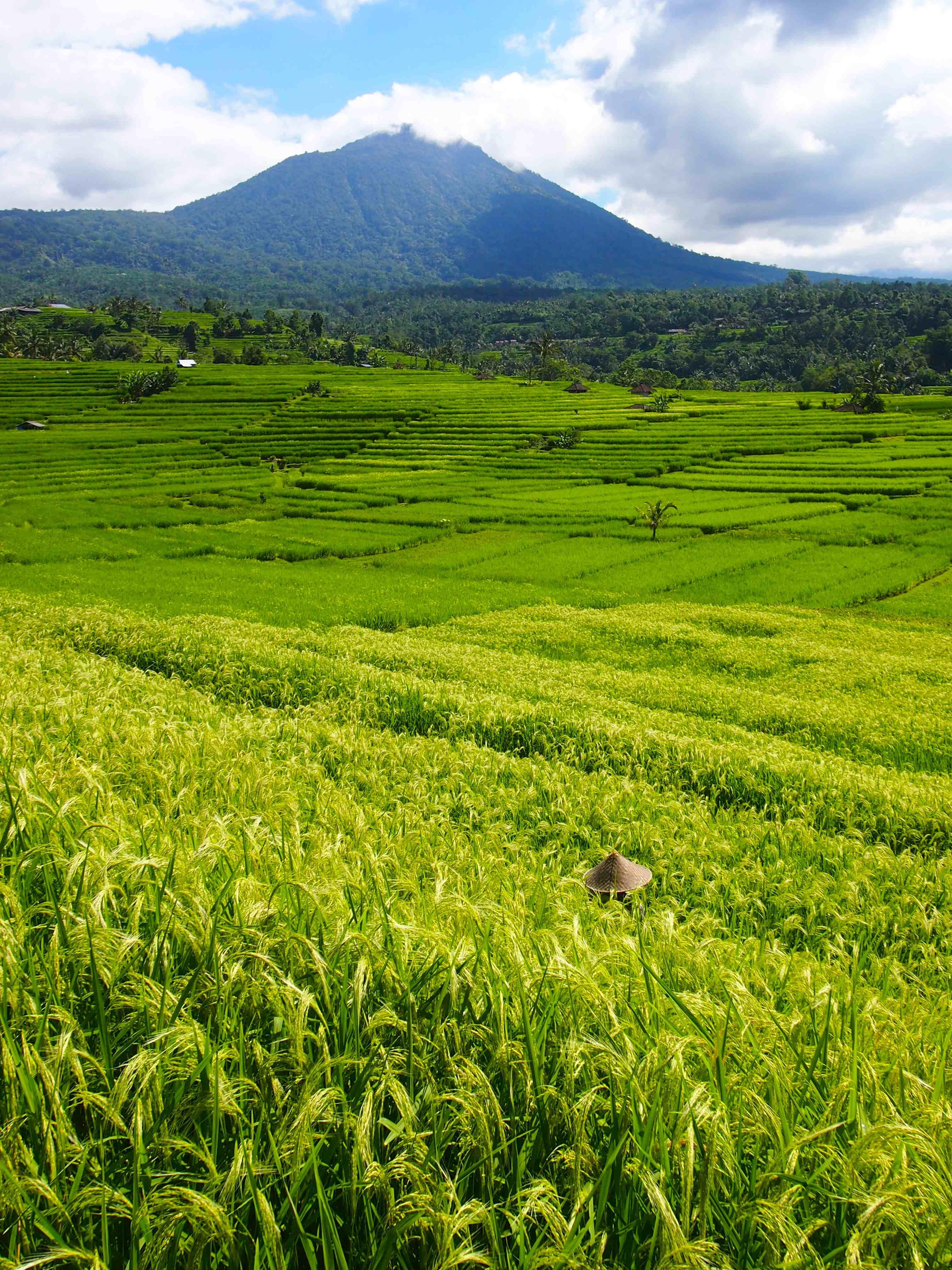 The Rice Fields of Jatiluwih-Bali, Indonesia - Global