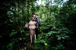 english elephant patrol indonesia