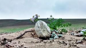flores entre plastico vida en el desierto de lima peru