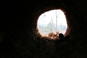 forest landscape jambi sumatra indonesia