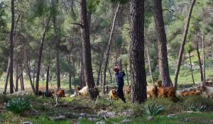 grazing israel