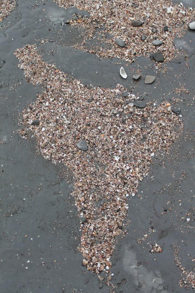 latin america in shells pacific coast colombia