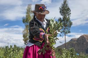 marcela simbolo de la agricultura familiar peru