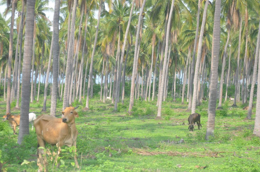 coco and pasture mexico