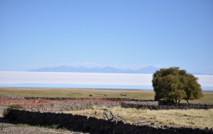 smallholder agriculture pasture and salt deposit bolivia