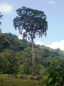 selva tropical nidos y ambiente humano veracruz mexico
