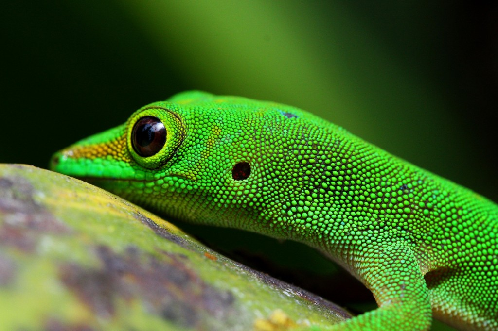Green-Gecko-–-Sabrina-van-de-Velde-1024x682