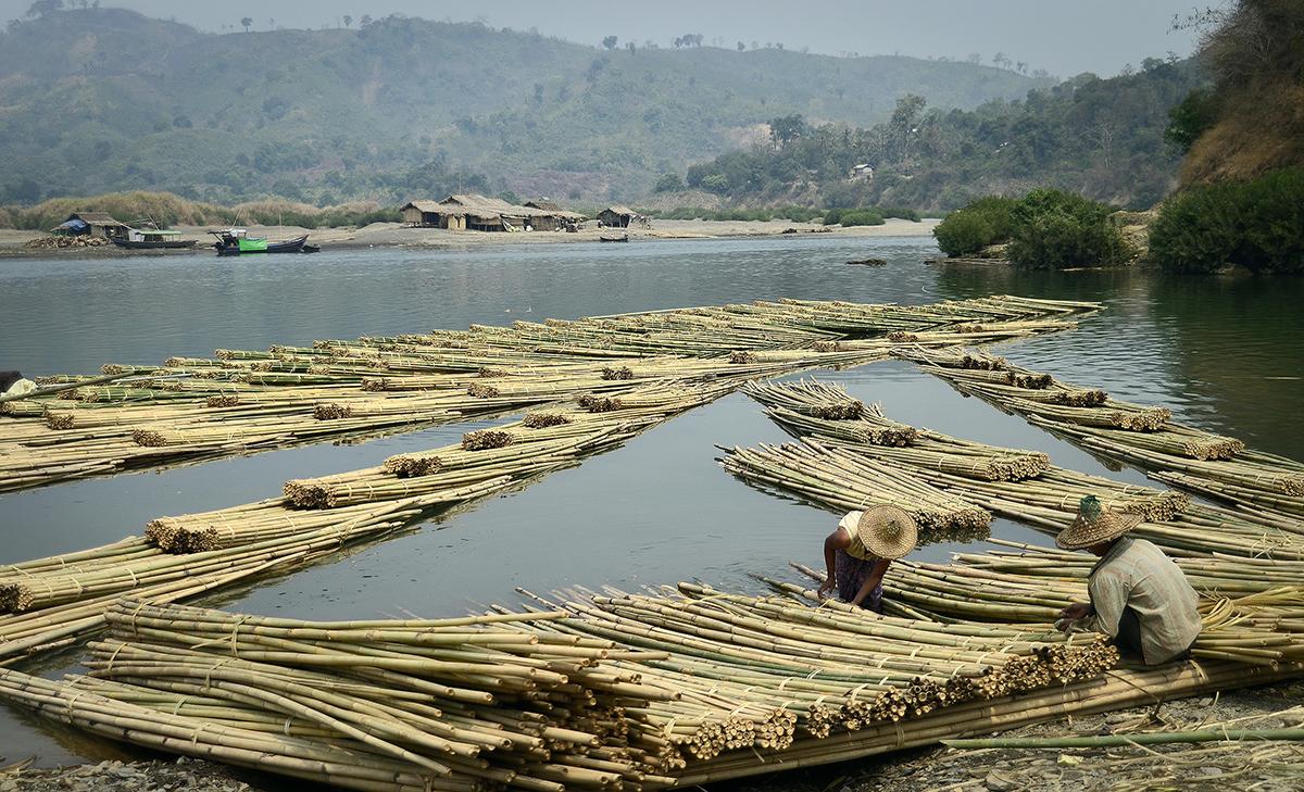 Bamboo harvesting in Myanmar