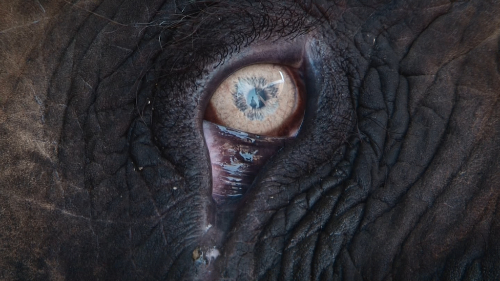 Man in the eye of an elephant