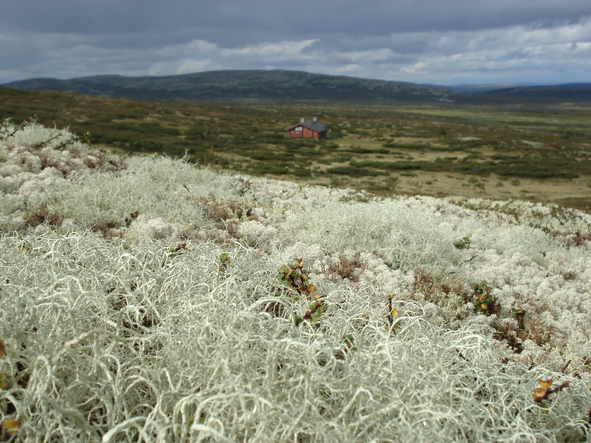 Between lichens