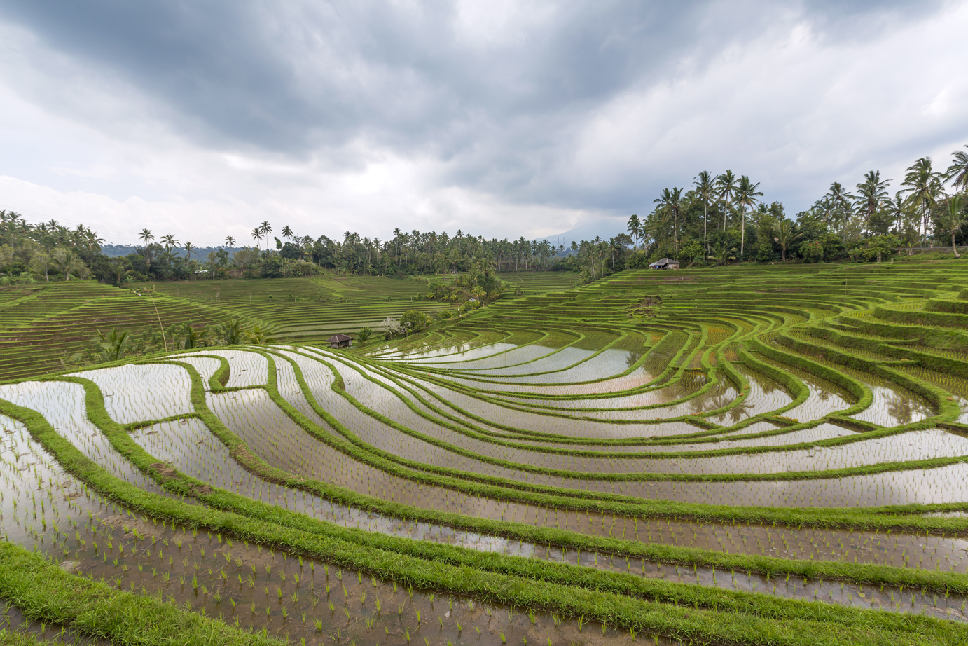 Pupuan rice terraces