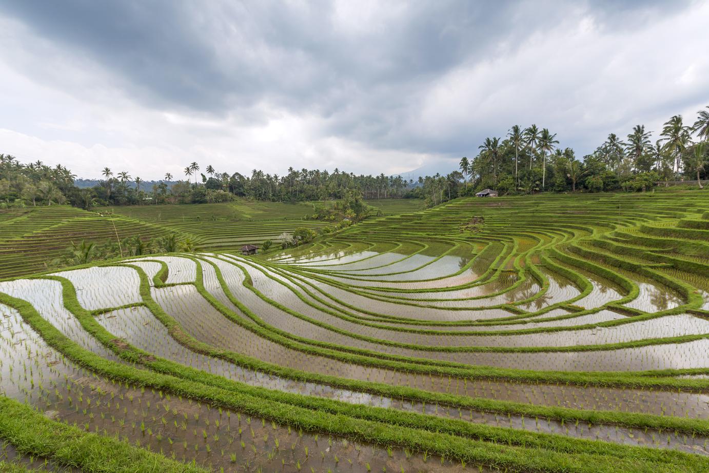 Pupuan rice terraces