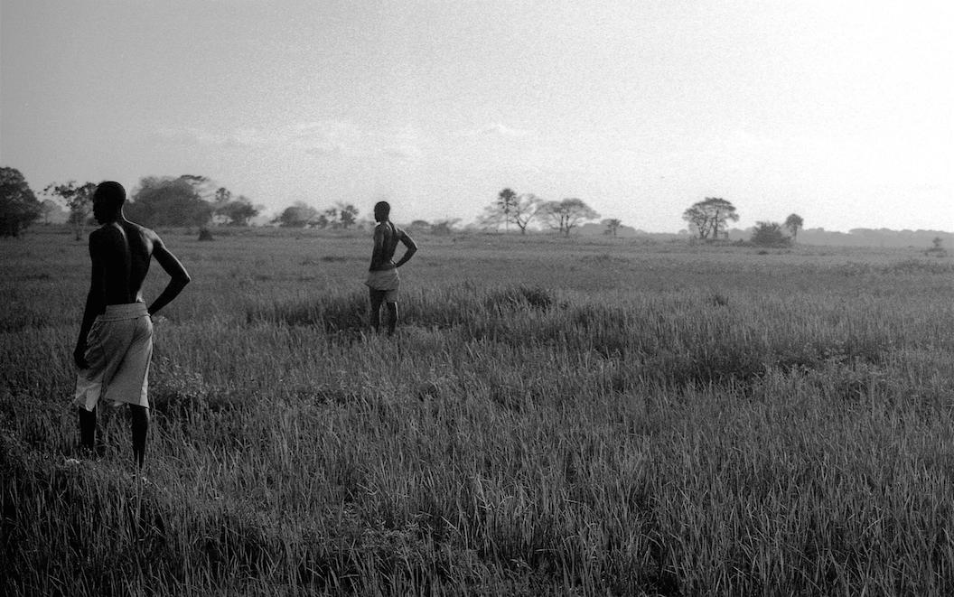 Senegalese rice farmers
