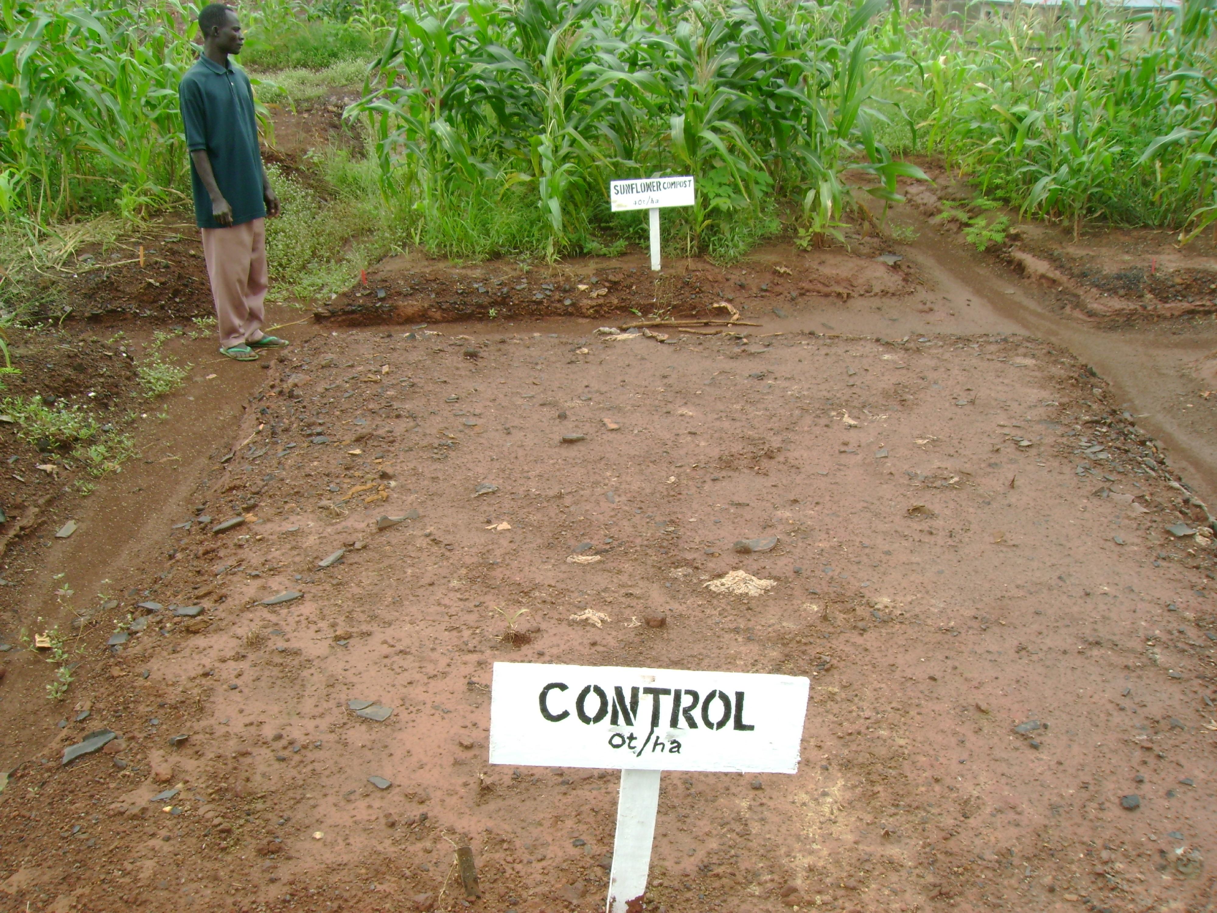 Land Reclamation Project on a Lead-Acid battery waste dumpsite in Ibadan, Nigeria.