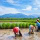 Subak (Irrigation System)