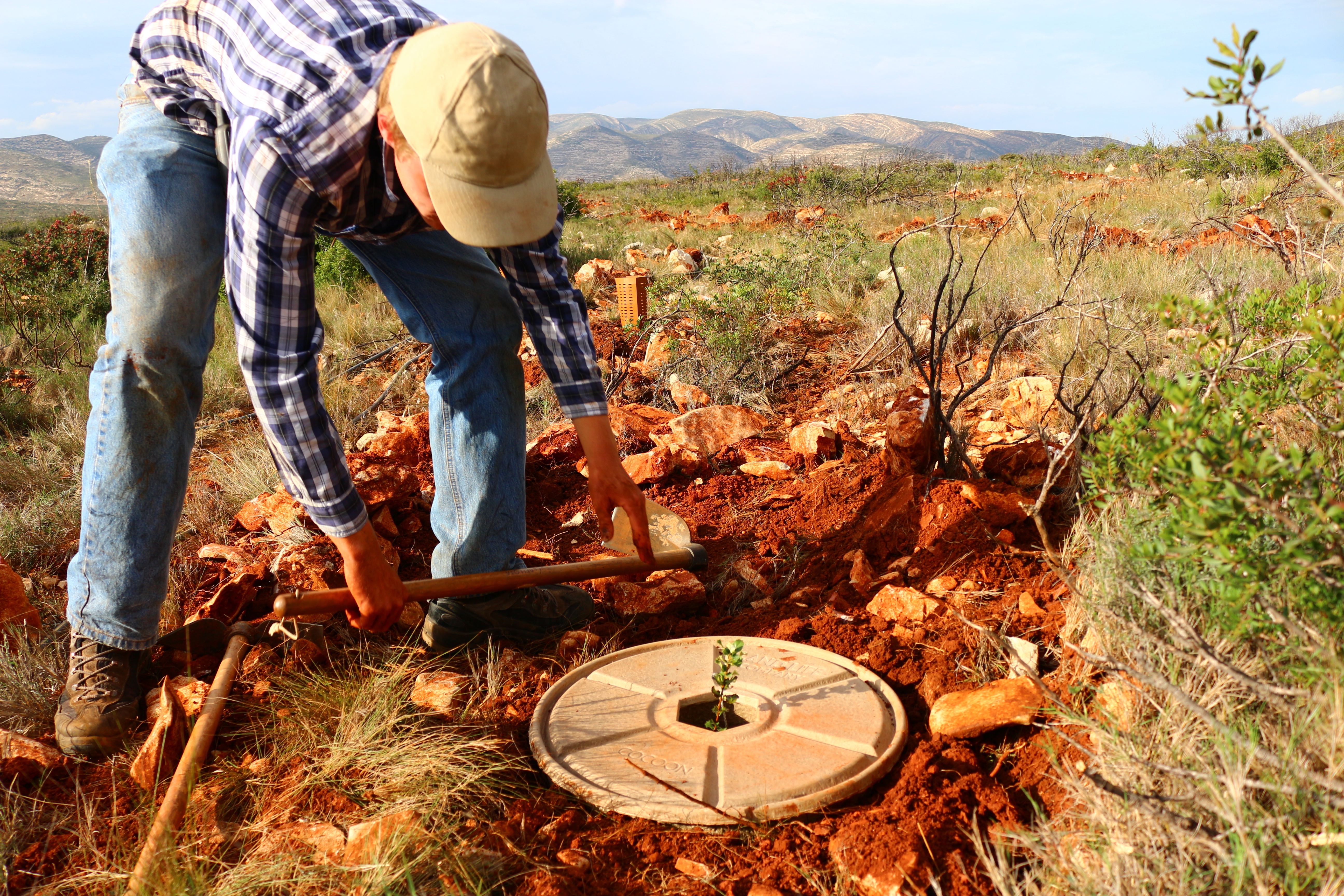 Restoring the Alicante highlands with the Cocoon