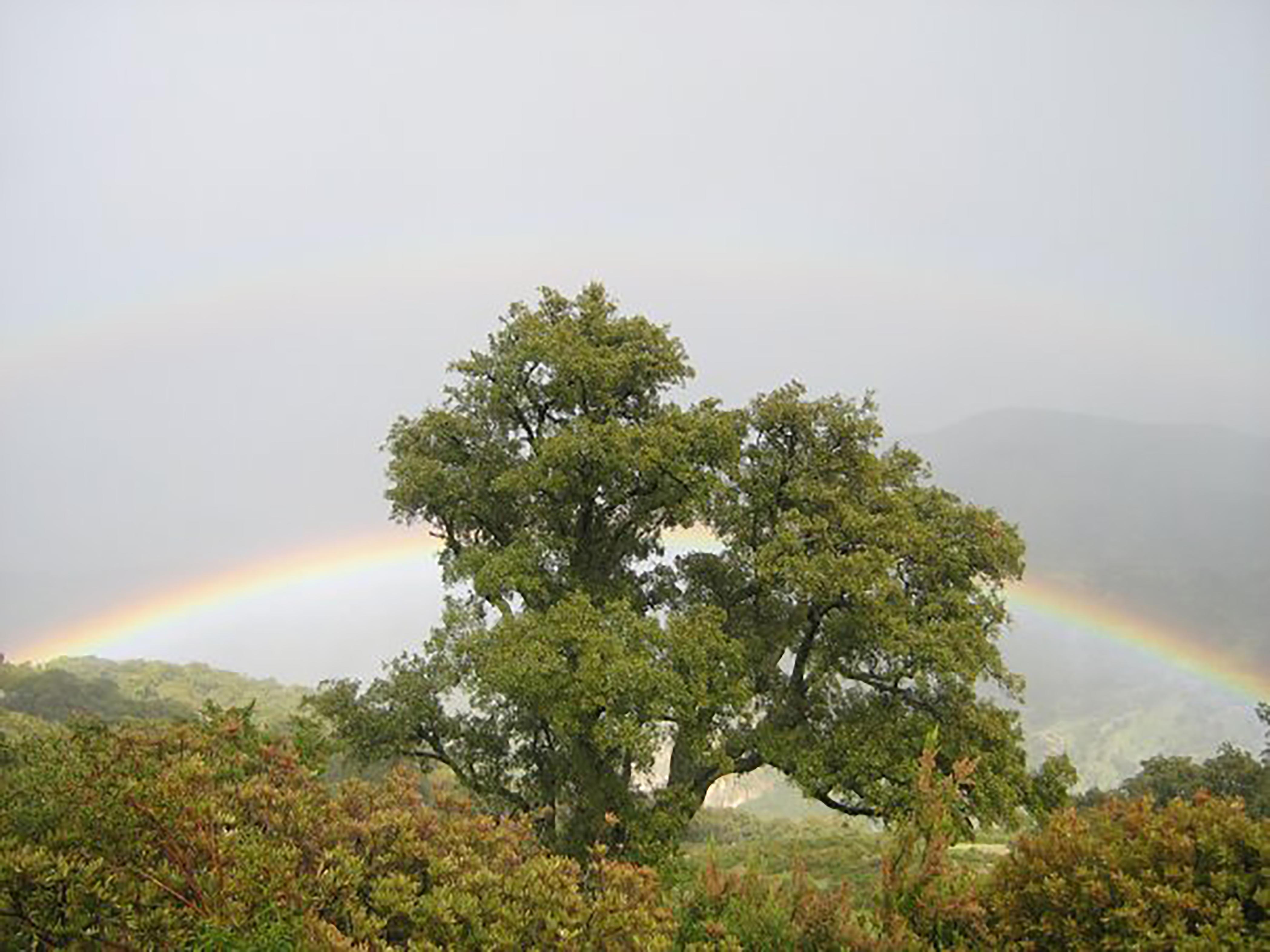 Khroumire Rainbow