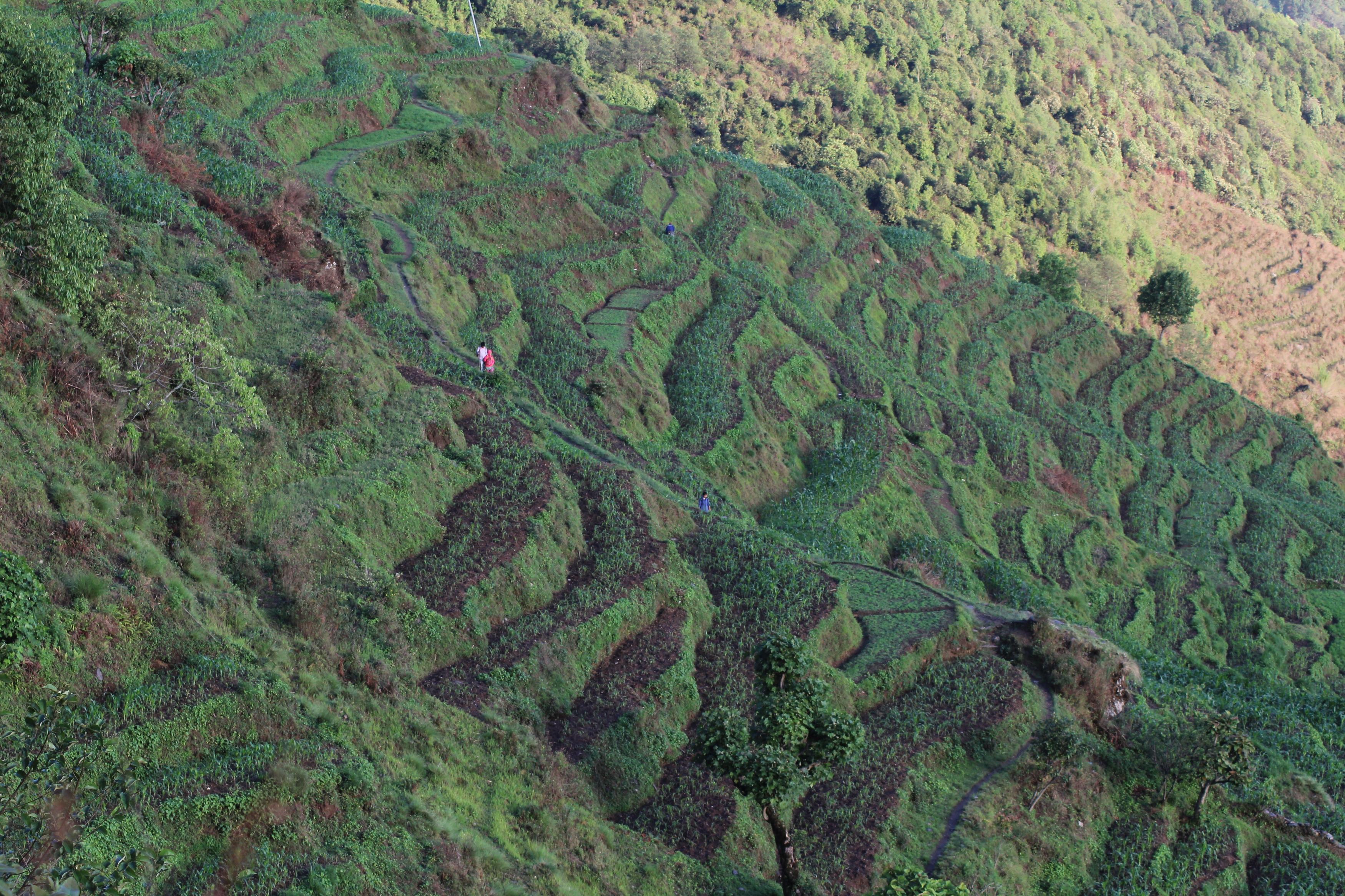 Terraced Landscape: A solution to soil erosion