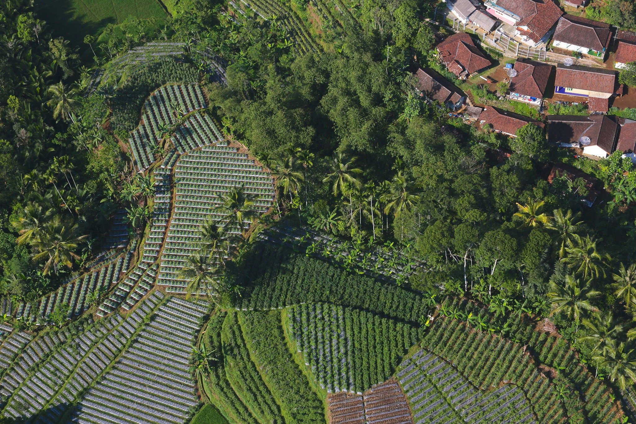 Mount Halimun Landscape in Indonesia: Combining incomes from forestry, agriculture, tourism and ecosystem services