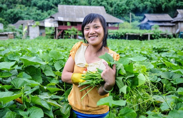 Young people like Nga Ha bundle chayote for money to buy school books in Tan Lac District Vietnam as part of SADU project. Georgina Smith/CIAT