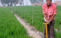 tree planting punjab