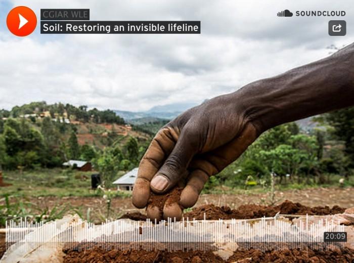 Thrive_Podcast__Restoring_an_invisible_lifeline__soil___SoilsSoils