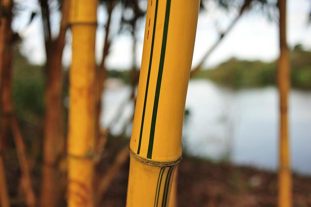 Amazon - Brazil, 2011. ©Neil Palmer/CIAT