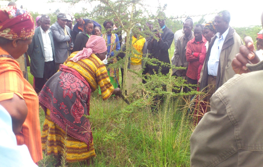 An extension agent delivering training to farmers