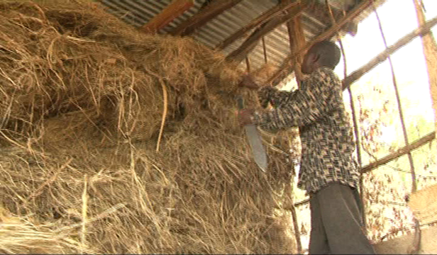 Harvested and stored grass in readiness for drought season.