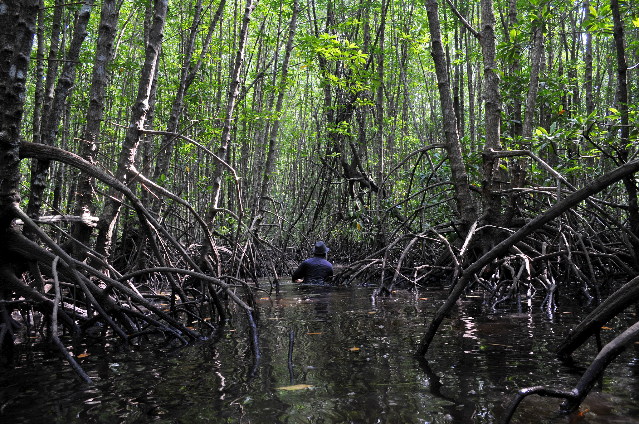 a study on mangrove ecosystems Status of wetlands in india: a review of extent, ecosystem benefits, threats and management strategies.