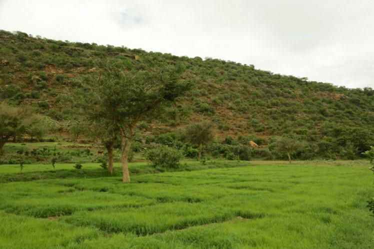 Forest landscape restoration in Ethiopia. Photo by Mokhamad Edliadi.